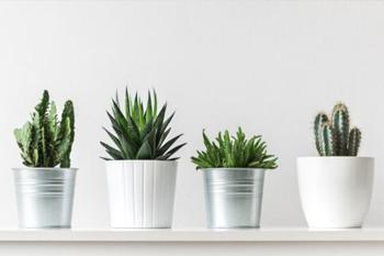 Photo d'un étagère avec 4 plantes grasses